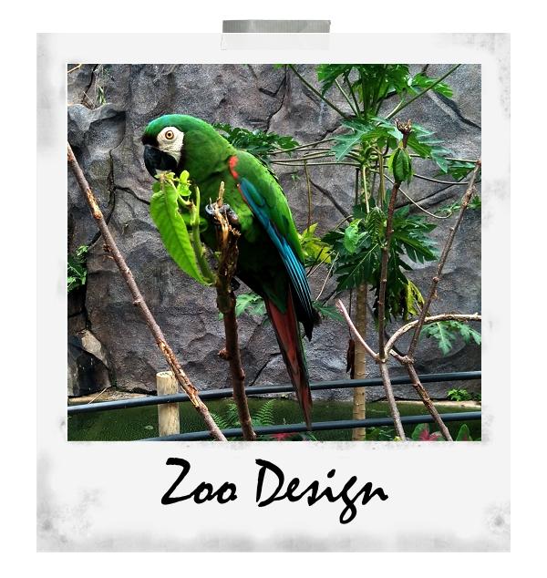 Zoodesign2